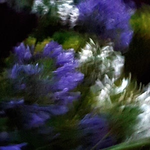 (CreativeWork) PURPLE AND WHITE - Limited Edition Print Ed. 3 of 15. Ready to hang. 29cm (W) x 19.5cm (H). Ed. 13 of 15 by Gerald Curtin. photograph. Shop online at Bluethumb.