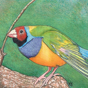 (CreativeWork) Gouldian Finch by Vikki Jackson. mixed-media. Shop online at Bluethumb.