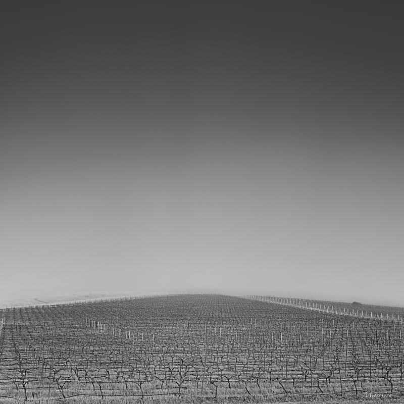(CreativeWork) Winter Vines Study#71 by Simon Mitrovich. photograph. Shop online at Bluethumb.