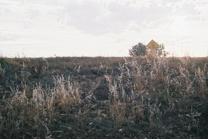 (CreativeWork) Analogue Landscape 03 by Rosemary Whatmuff. photograph. Shop online at Bluethumb.