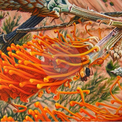 (CreativeWork) Flame Grevillea excelsior by Delma White. Oil Paint. Shop online at Bluethumb.