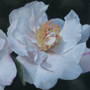 (CreativeWork) White Camellia by Craig Taylor. drawing. Shop online at Bluethumb.