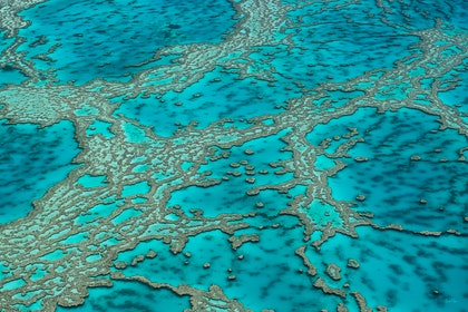 (CreativeWork) Coral Veins by Brooke Miles. photograph. Shop online at Bluethumb.