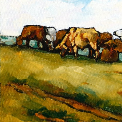 cattle with Glass House Mountains view