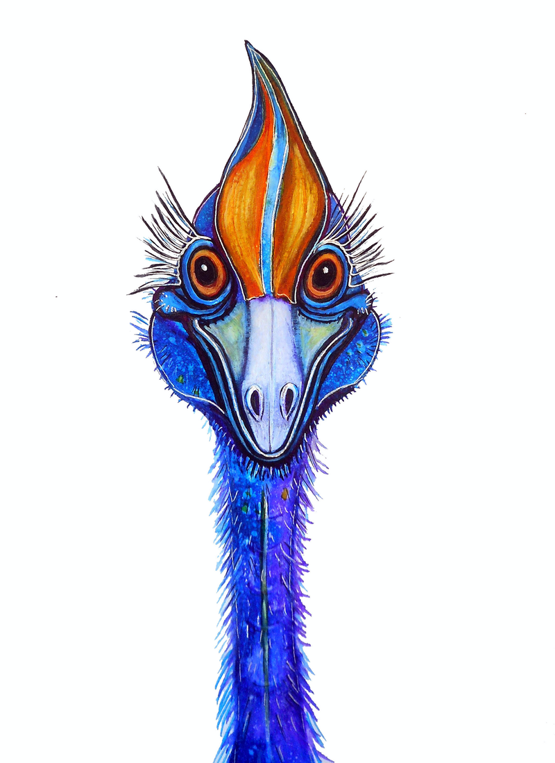 (CreativeWork) Cassowary - Smile! (Framed) by Linda Callaghan. Watercolour Paint. Shop online at Bluethumb.