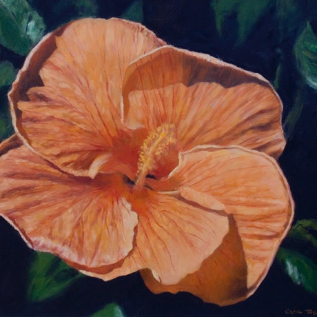 (CreativeWork) Orange Hibiscus by Craig Taylor. Oil Paint. Shop online at Bluethumb.