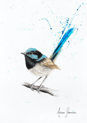 (CreativeWork) Wren Wisdom by Ashvin Harrison. Drawings. Shop online at Bluethumb.