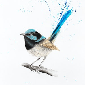 (CreativeWork) Wren Wisdom by Ashvin Harrison. drawing. Shop online at Bluethumb.