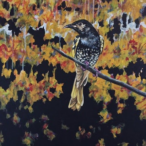 (CreativeWork) Regent Bowerbird by april white. arcylic-painting. Shop online at Bluethumb.