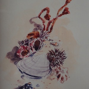 (CreativeWork) Miniature treasures from the Sea by Heidi Hereth. watercolour. Shop online at Bluethumb.