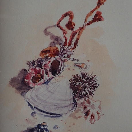 (CreativeWork) Miniature treasures from the Sea by Heidi Hereth. Watercolour Paint. Shop online at Bluethumb.