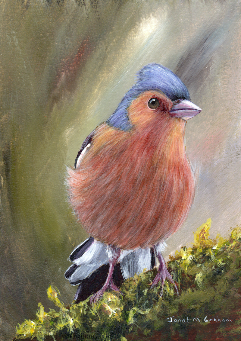 (CreativeWork) Chaffinch by Janet Graham. acrylic-painting. Shop online at Bluethumb.