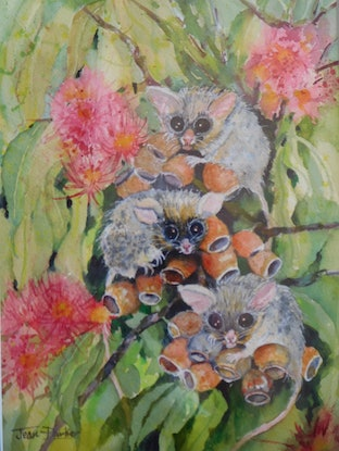 (CreativeWork) Curious Sugar Gliders by Jean Parker. Watercolour Paint. Shop online at Bluethumb.