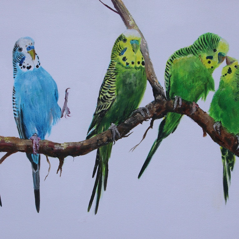 A Chatter of Budgies