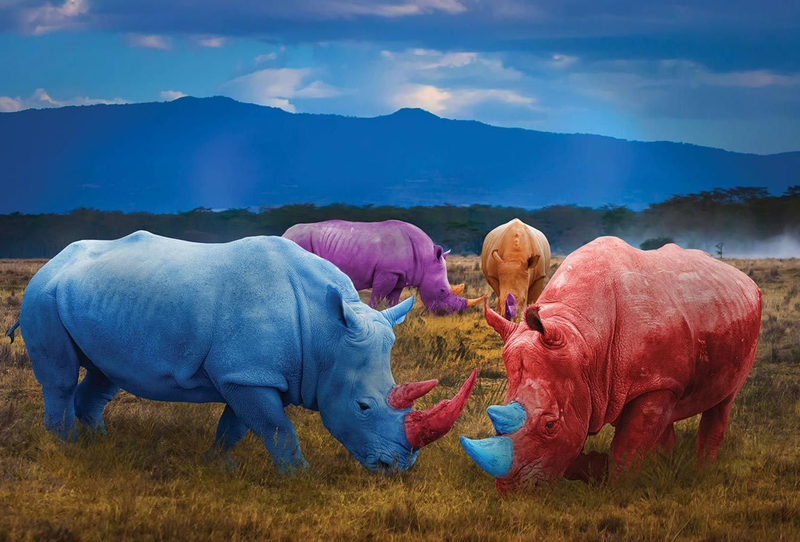 (CreativeWork)  They had a colourful life by Gillie and Marc Schattner. photograph. Shop online at Bluethumb.