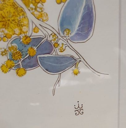 (CreativeWork) Acacia podalyriifloria by Jeanette Giroud. Drawings. Shop online at Bluethumb.
