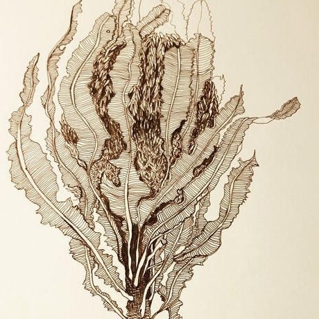 (CreativeWork) Banksia menziesii  by Jeanette Giroud. Drawings. Shop online at Bluethumb.