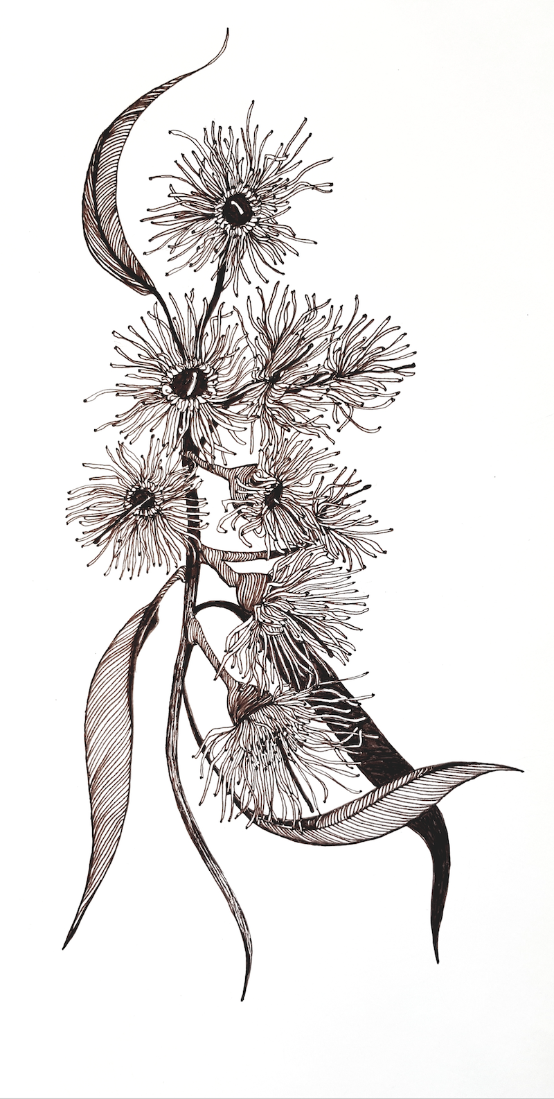 (CreativeWork) Blossoming Beautiful by Jeanette Giroud. Drawings. Shop online at Bluethumb.
