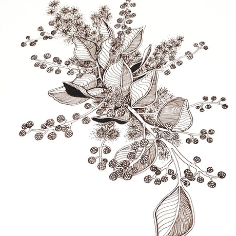 (CreativeWork) Acacia by Jeanette Giroud. Drawings. Shop online at Bluethumb.