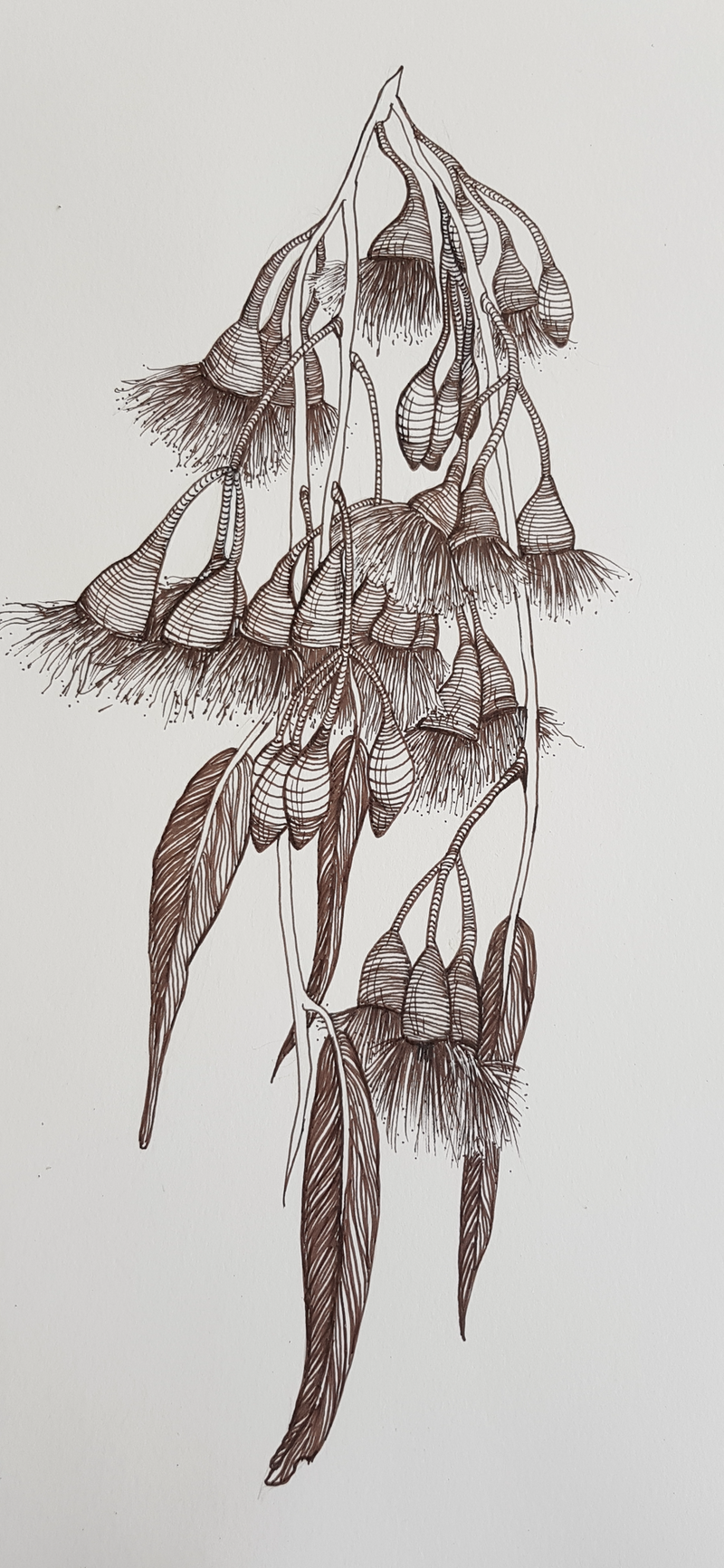(CreativeWork) Gum Blossoms by Jeanette Giroud. Drawings. Shop online at Bluethumb.
