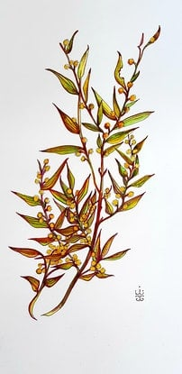 (CreativeWork) Golden Wattle by Jeanette Giroud. Acrylic Paint. Shop online at Bluethumb.