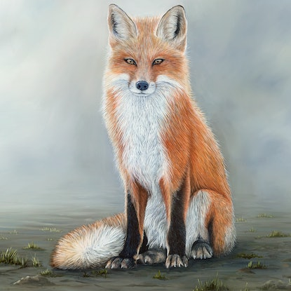 (CreativeWork) The Waiting Game - Fox Limited Edition Canvas Print Ed. 13 of 25 by Michelle Williamson. Print. Shop online at Bluethumb.