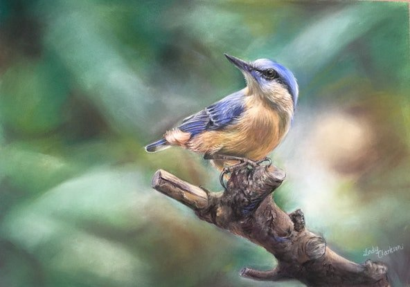 (CreativeWork) A Moment  - pastel painting of a Nuthatch by Lindy Clarkson. Drawings. Shop online at Bluethumb.