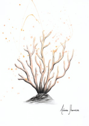 (CreativeWork) New Coral by Ashvin Harrison. Drawings. Shop online at Bluethumb.