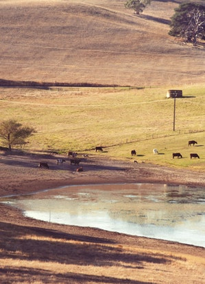 (CreativeWork) Summer Pastorale Ed. 1 of 1 by Alex Frayne. Photograph. Shop online at Bluethumb.