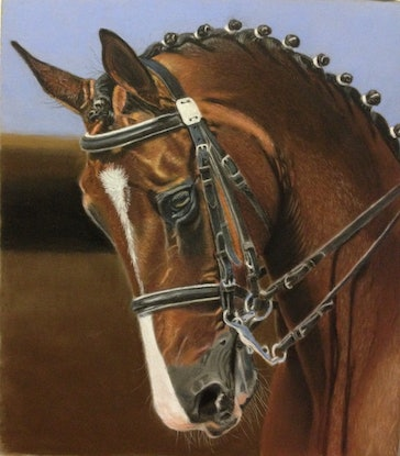 (CreativeWork) Beautiful Horse by Gary Thomas. Drawings. Shop online at Bluethumb.