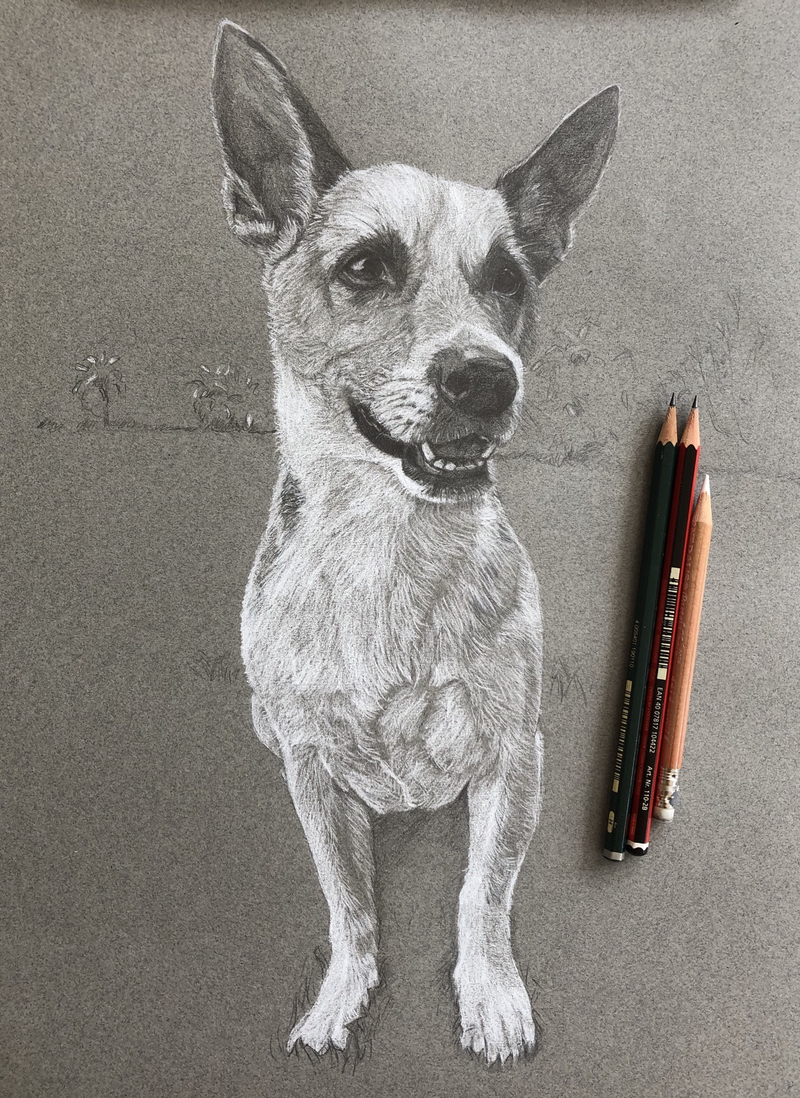 (CreativeWork) Alfie - commission by Kate Gradwell. Drawings. Shop online at Bluethumb.