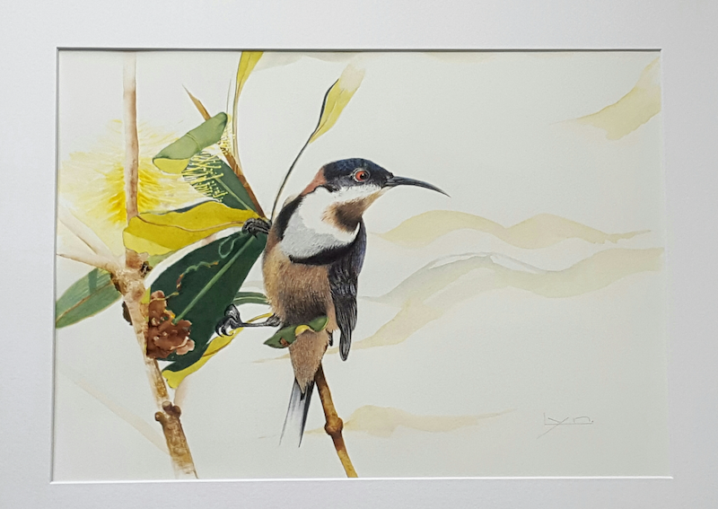 (CreativeWork)  Eastern spine bill honey eater  by Lynette Lucas. Drawings. Shop online at Bluethumb.