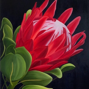 (CreativeWork) Protea by Yvonne Hegarty. oil-painting. Shop online at Bluethumb.