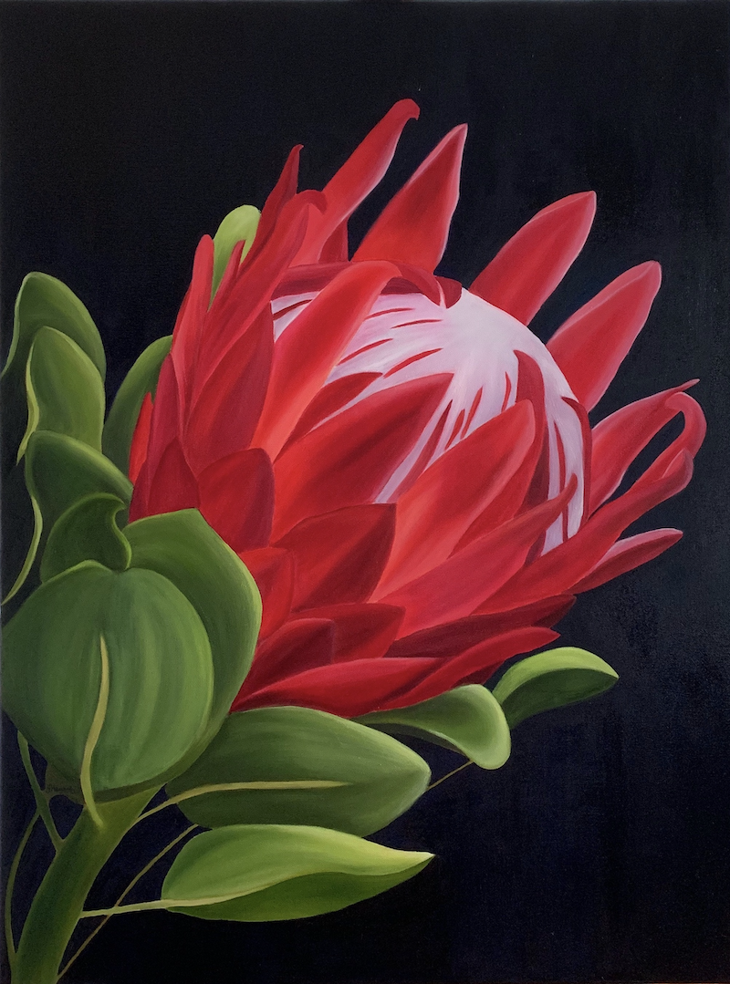 (CreativeWork) Protea by Yvonne Hegarty. Oil Paint. Shop online at Bluethumb.