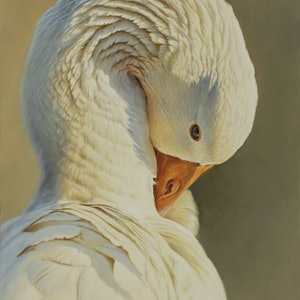 (CreativeWork) 'Peaceful' Preaning Goose by Brett Jarrett. oil-painting. Shop online at Bluethumb.