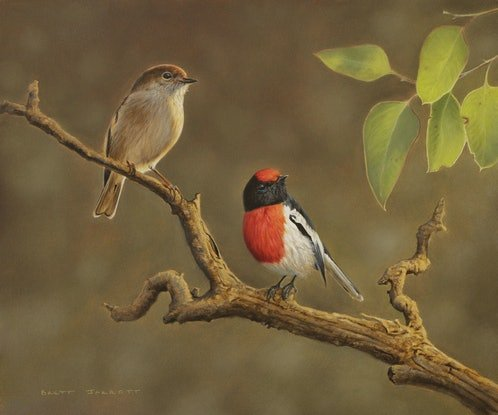 (CreativeWork) Red-capped Robins by Brett Jarrett. Oil Paint. Shop online at Bluethumb.