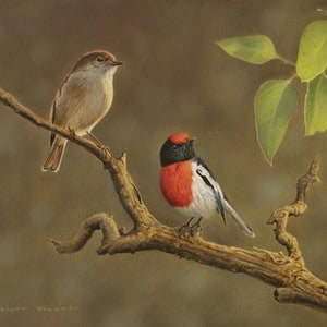 (CreativeWork) Red-capped Robins by Brett Jarrett. oil-painting. Shop online at Bluethumb.