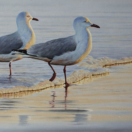 (CreativeWork) 'Shoreline' Silver Gulls by Brett Jarrett. Oil Paint. Shop online at Bluethumb.