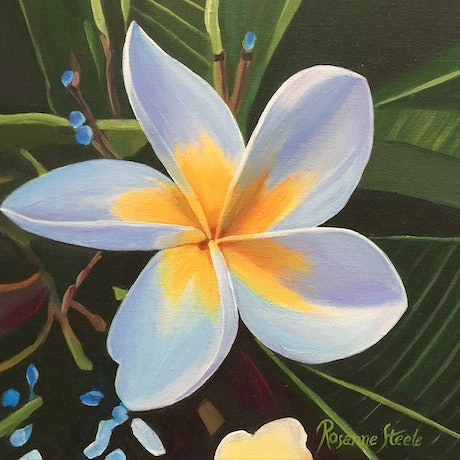 (CreativeWork) White Frangipani by Rosanne Steele. Acrylic Paint. Shop online at Bluethumb.