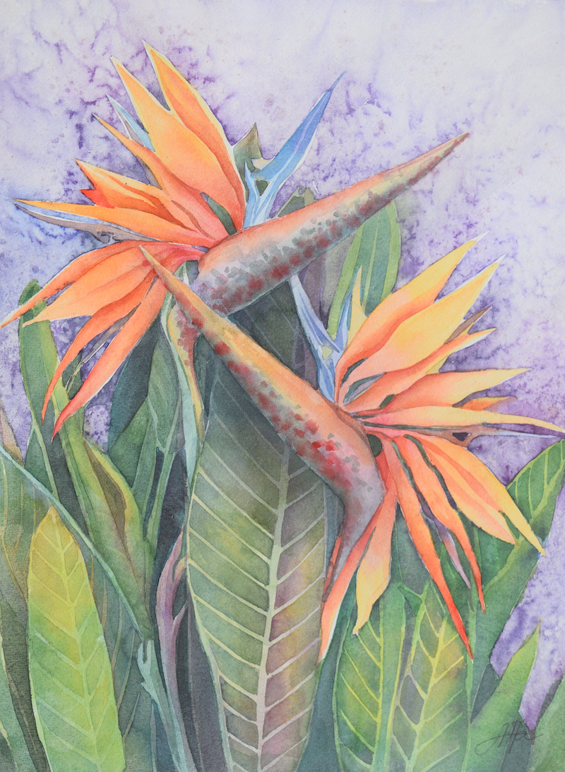 (CreativeWork) Bird of Paradise or Strelitzia. Original watercolor painting. Unframed. by Alla Art. Watercolour Paint. Shop online at Bluethumb.