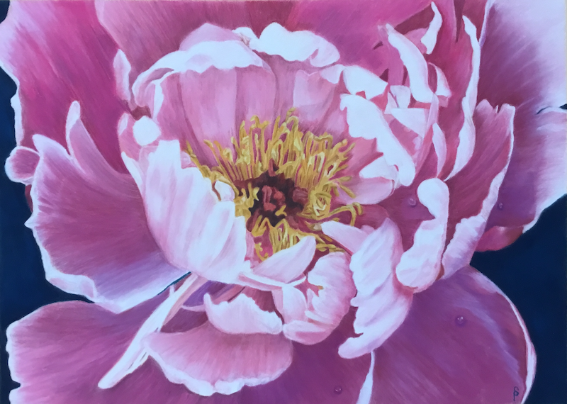 (CreativeWork) Pink Peony  (Framed) by Suzanne Perez. Other Media. Shop online at Bluethumb.