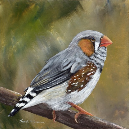 (CreativeWork) Zebra Finch by Janet Graham. Acrylic Paint. Shop online at Bluethumb.
