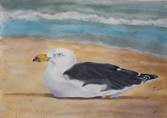 (CreativeWork) Gull resting on the beach by Svetlana Cook. Watercolour Paint. Shop online at Bluethumb.
