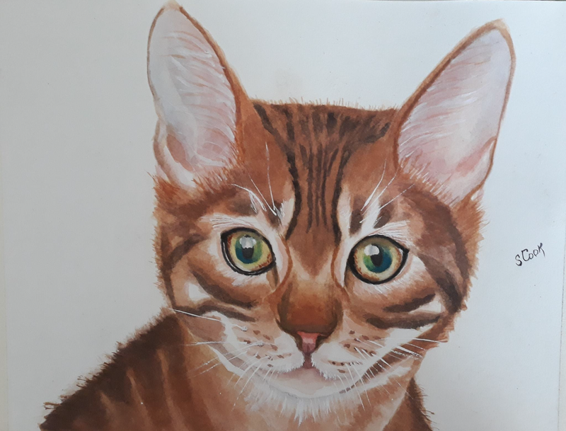 (CreativeWork) Kitten by Svetlana Cook. Watercolour Paint. Shop online at Bluethumb.