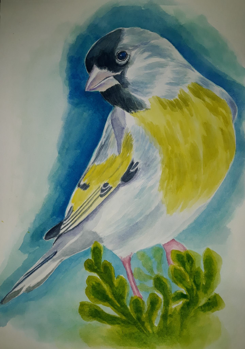 (CreativeWork) Goldfinch by Svetlana Cook. Watercolour Paint. Shop online at Bluethumb.