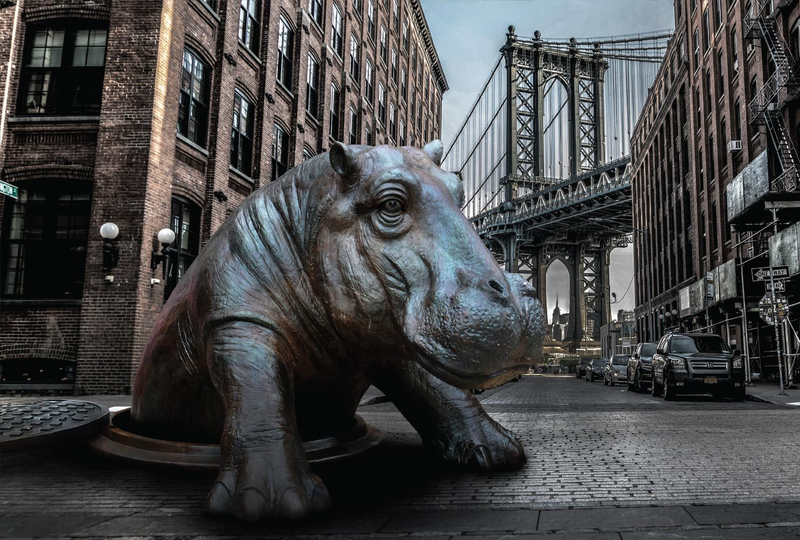 (CreativeWork)  Come Out Hippo by Gillie and Marc Schattner. Photograph. Shop online at Bluethumb.