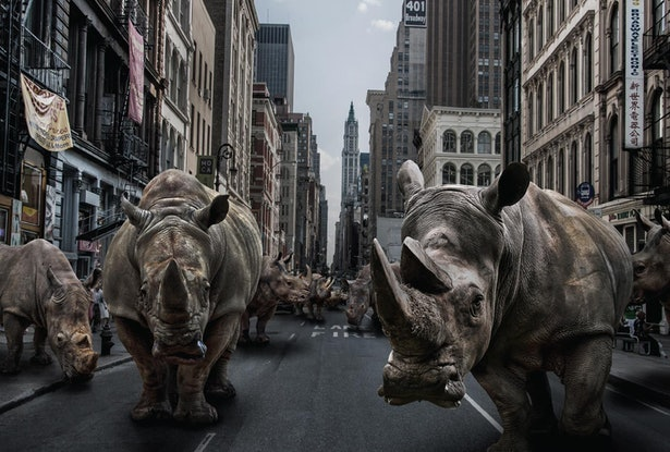 (CreativeWork)  Rhinos in the City by Gillie and Marc Schattner. Print. Shop online at Bluethumb.