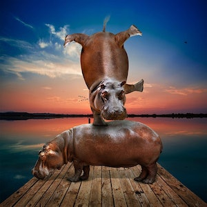 (CreativeWork)  Their life was a balancing act by Gillie and Marc Schattner. photograph. Shop online at Bluethumb.