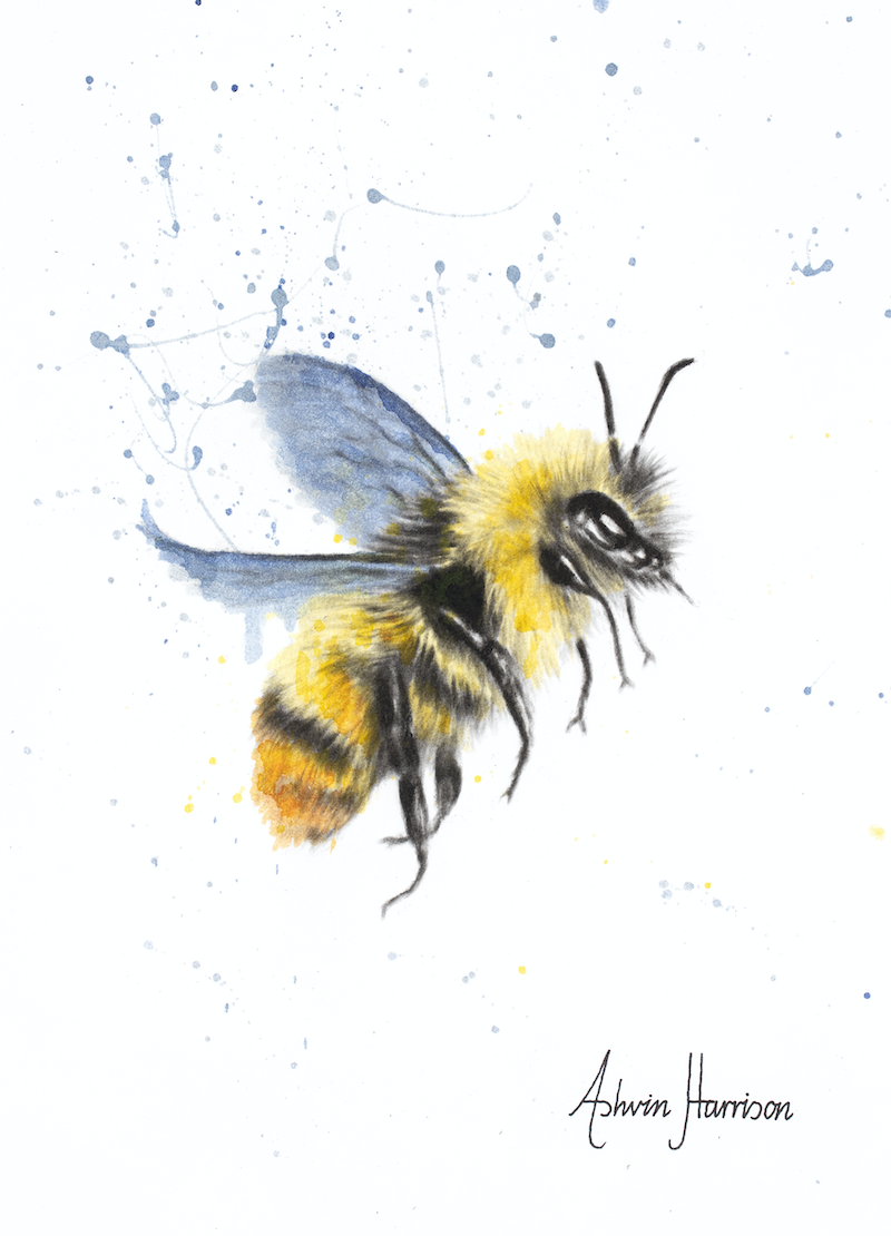 (CreativeWork) Sun Bee by Ashvin Harrison. drawing. Shop online at Bluethumb.