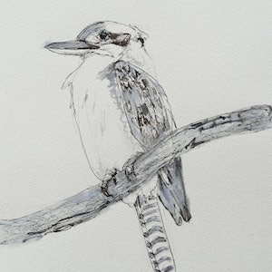 (CreativeWork) LAUGHING KOOKABURRA   (ref. 0319) by Colin L. Williams. drawing. Shop online at Bluethumb.